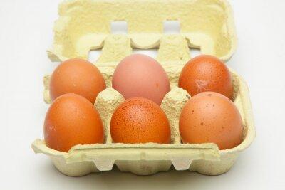Fototapeta Media docena de huevos frescos de gallina, preparados para ser cocinados de mil maneras distintas.