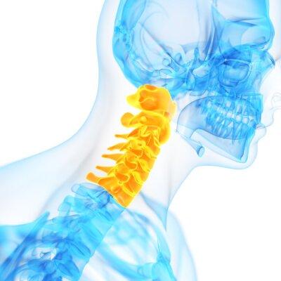 Fototapeta medycznych 3d kręgosłupa szyjnego