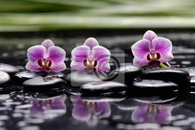 Menchie trzy orchidei na czarnych kamieniach z rośliną, odbicie