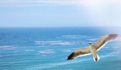 Fototapeta Mewa latać nad oceanem
