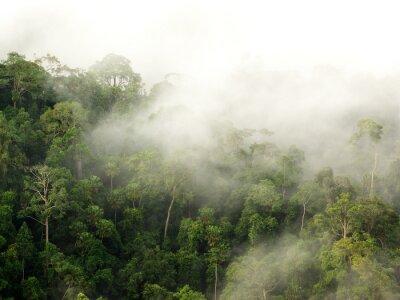 Fototapeta mgła nad górskim, Tajlandia