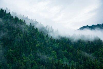 Fototapeta Mgła nad lasem