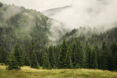 Fototapeta mgła pokrycie jodły las w górski krajobraz