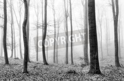 Fototapeta Mgła w lasach w BW
