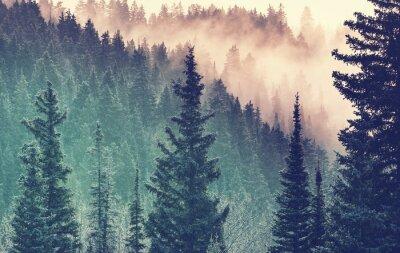 Fototapeta Mgła w lesie