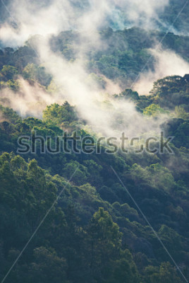 Fototapeta Mglisty czytać tropikalny