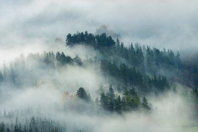 Fototapeta mglisty krajobraz leśny