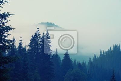 Fototapeta Mglisty krajobraz z góry i jodły las w hipster stylu retro vintage
