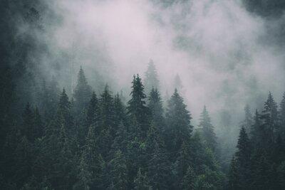 Fototapeta Mglisty krajobraz z jodły las w hipster vintage retro styl, naturalne tło