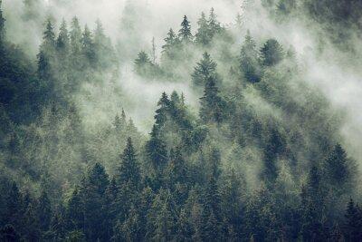 Mglisty krajobraz z jodły lasu w stylu retro vintage hipster