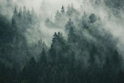 Fototapeta Mglisty krajobraz z jodły lasu w stylu retro vintage hipster