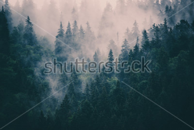 Fototapeta Mglisty krajobraz z jodły w stylu retro hipster