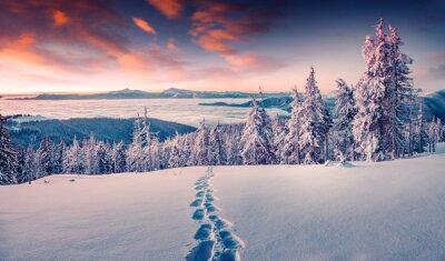 Fototapeta Mglisty świt zimowy w górach śniegu