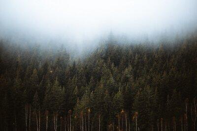 Fototapeta Mglisty zimozielony las