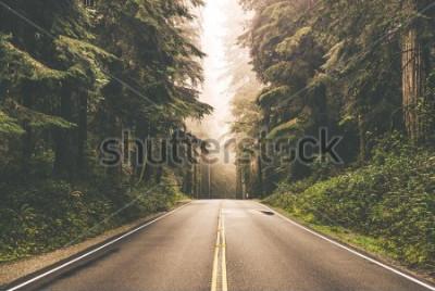 Fototapeta Mgłowa Prosta Redwood autostrada w Północnym Kalifornia, Stany Zjednoczone