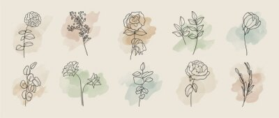 Fototapeta Minimal botanical hand drawing design for logo and wedding invitation. Floral line art.  Flower and leaves on watercolour background design collection for bouquets decoration, invite, packaging design