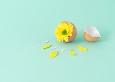 Fototapeta Minimal composition with yellow flower popping out of cracket eggshell on mint green background. Creative easter 2021 idea.