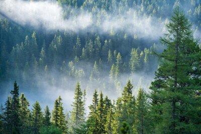 Fototapeta mist rising from valleys in forest in slovakia Tatra mountains