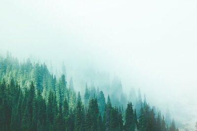 Fototapeta Misty fog pine forest mountain slopes color toning