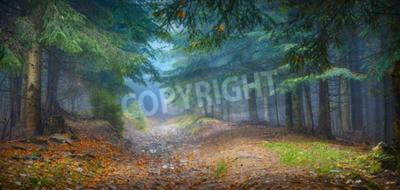 Fototapeta Misty Karpacki las z starych drzew w magicznym światłem niebieskim