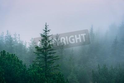 Fototapeta Misty lasów górskich. Zachodnie Tatry, Polska