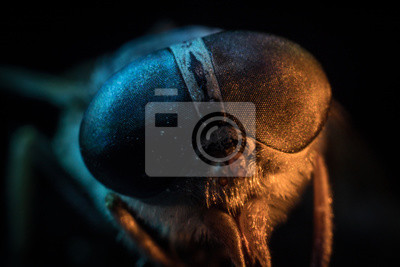 Fototapeta Mixed light. Horsefly or Gadfly or Horse Fly Diptera Insect Macro. Selective focus.