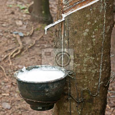 Mleko z drzewa kauczukowego w drewnianej misce