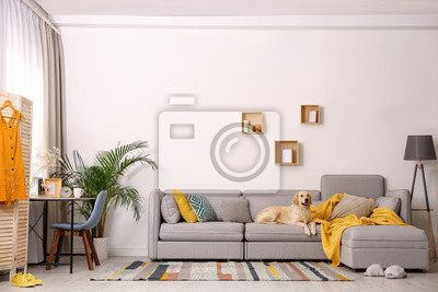 Fototapeta Modern living room interior. Cute Golden Labrador Retriever on couch