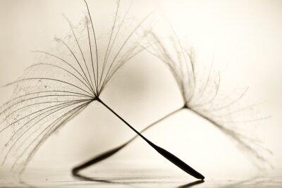 Fototapeta Mokre dandelion na białym, błyszczącej powierzchni z małych kropelek