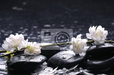 Mokre kamienie i kwiaty, płatek z liścia