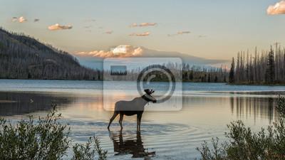 Fototapeta Moose stojąca w Montana górskie jezioro o zmierzchu