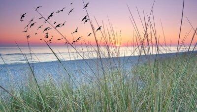 Fototapeta morgens Hinter den Dünen, Sonnenaufgang am Meer