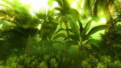 Fototapeta Morning fog in dense tropical rainforest