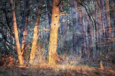 Fototapeta Morning in forest