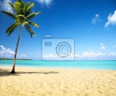 Fototapeta morze i palmy kokosowe