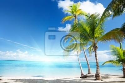 Fototapeta Morze Karaibskie i kokosowe palmy