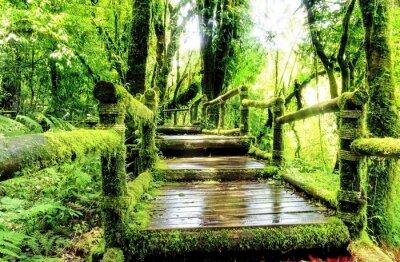 Fototapeta Moss wokół drewnianej chodnik w lesie deszczowym, Tajlandia