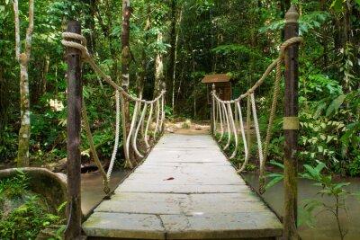 Fototapeta most linowy nad rzeką w lesie