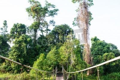 Fototapeta Most linowy w parku narodowym w Tajlandii