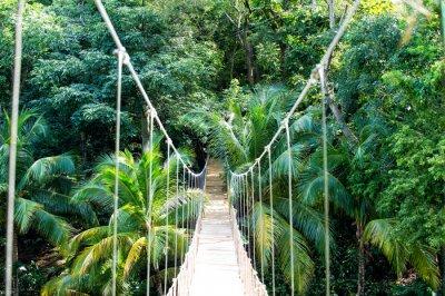 Fototapeta Most liny wiszący w lasach tropikalnych w Hondurasie