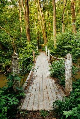 Fototapeta Most na las