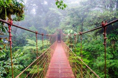 Fototapeta Most w Rainforest - Kostaryka - Monteverde