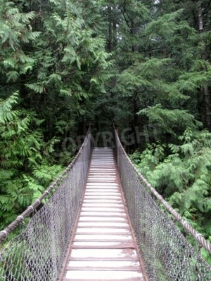 Fototapeta Most wiszący nad Lynn Creek w parku Lynn Canyon, BC, Kanada