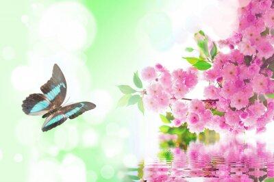 Fototapeta Motyl i kwiat wiśni