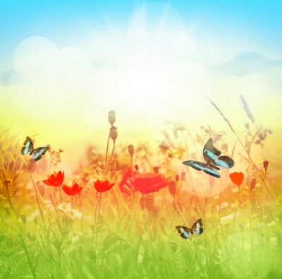Fototapeta Motyl i lato łąka
