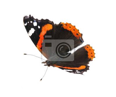 Fototapeta Motyl na białym tle