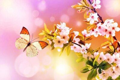 Fototapeta Motyl na gałęzi kwitnących