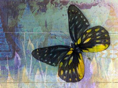 Fototapeta Motyl (tajski tło)