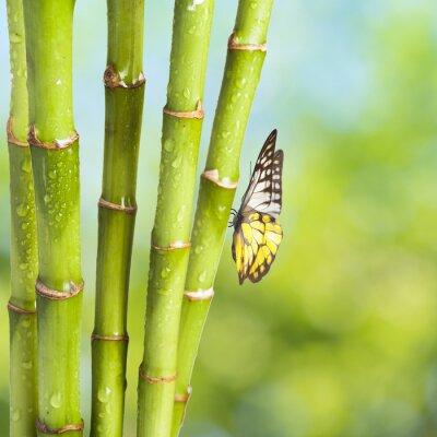 Fototapeta Motyl z Bamboo