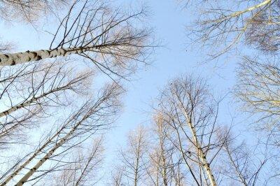 Fototapeta Mrożone drzewa przeciw jasnego nieba